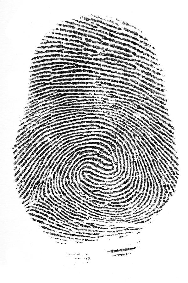 Finger Print Double Loop Whorl Photograph by Vcnw