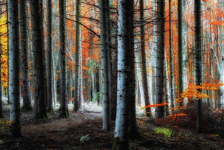 Forest Photograph - Fire!! by Francesco Martini