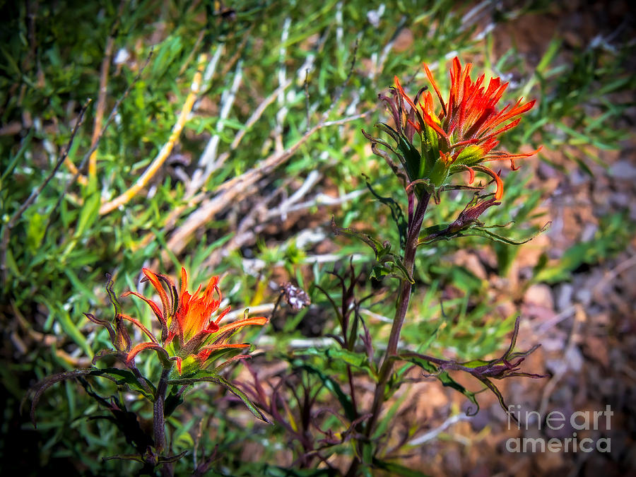 Fire Paintbrush by Stan Townsend