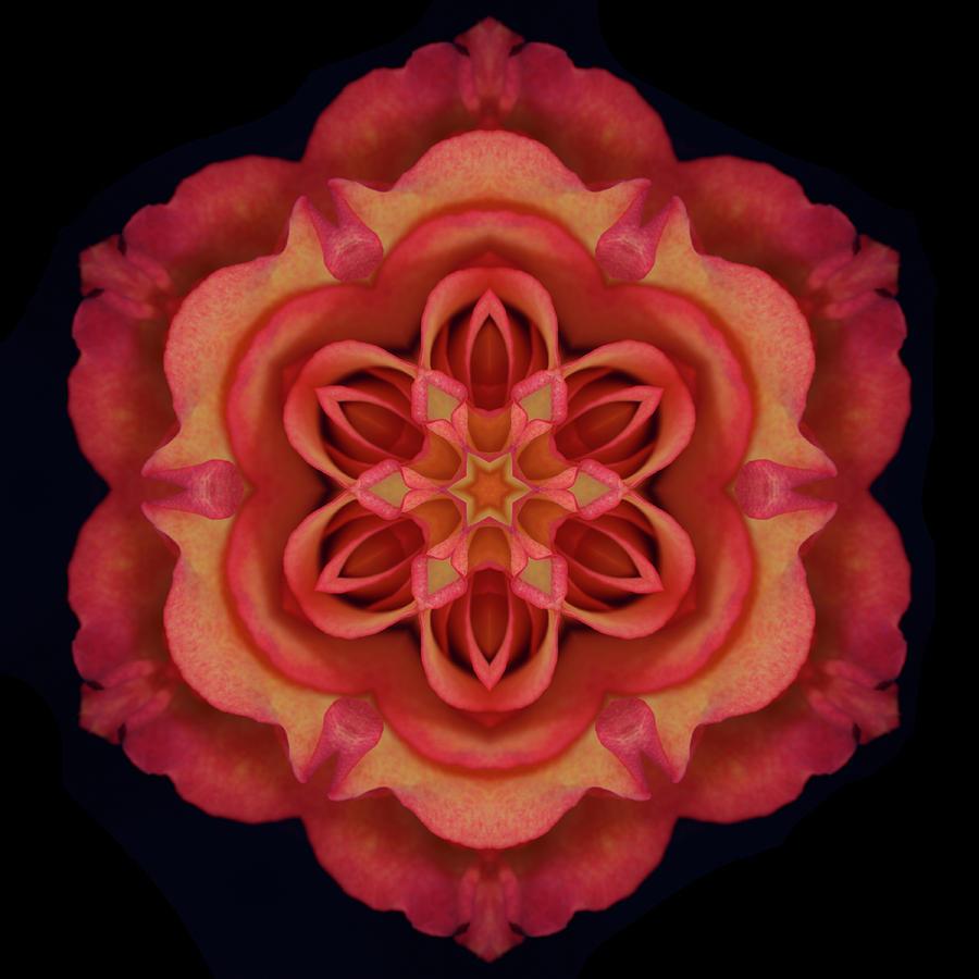 Fire Rose 3 by Marsha Tudor