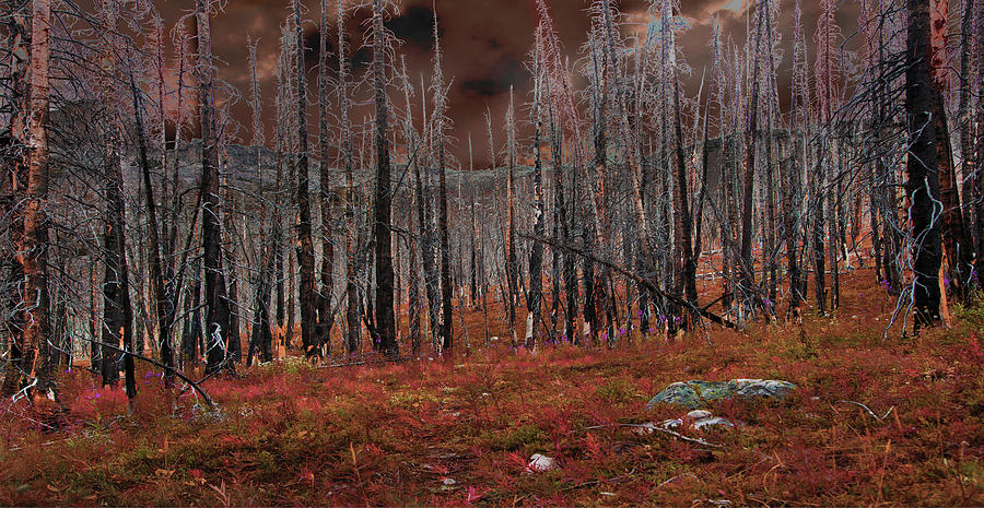fire trees by David Brookwell