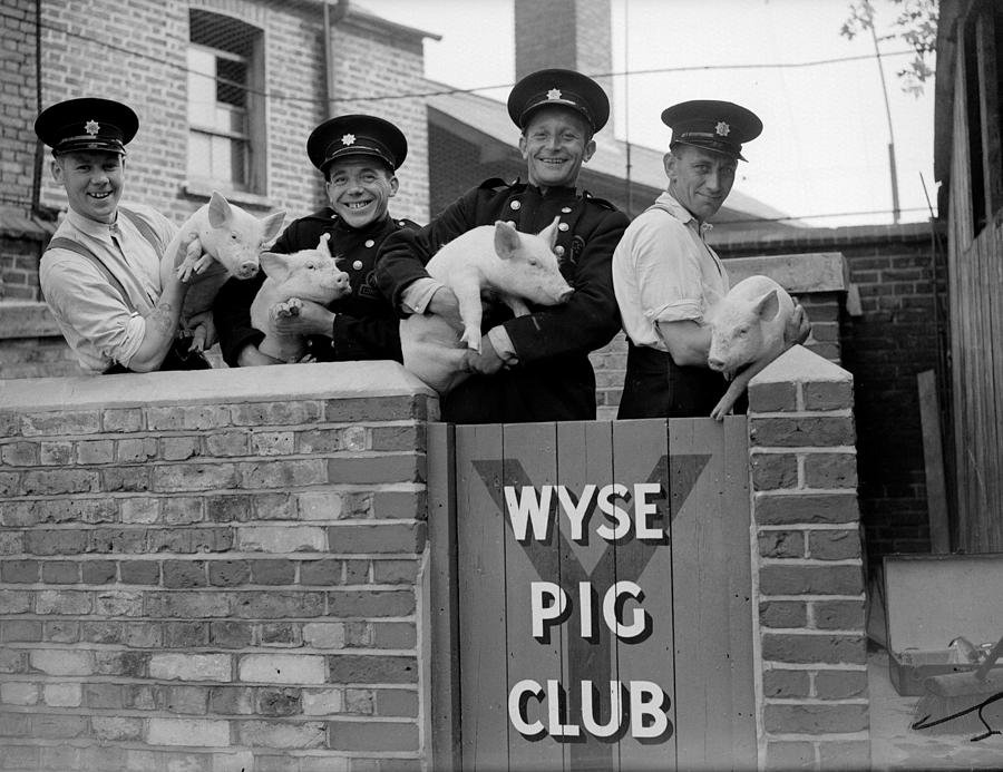 Firemens Pigs Photograph by Harry Todd