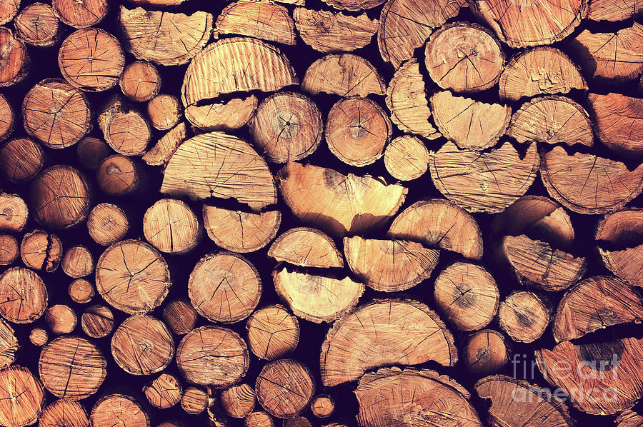 Wood Photograph - Firewood Logs by Delphimages Photo Creations