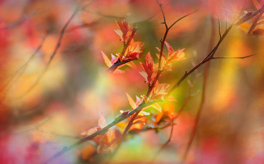 First Autumn Leaf by Diana Angstadt