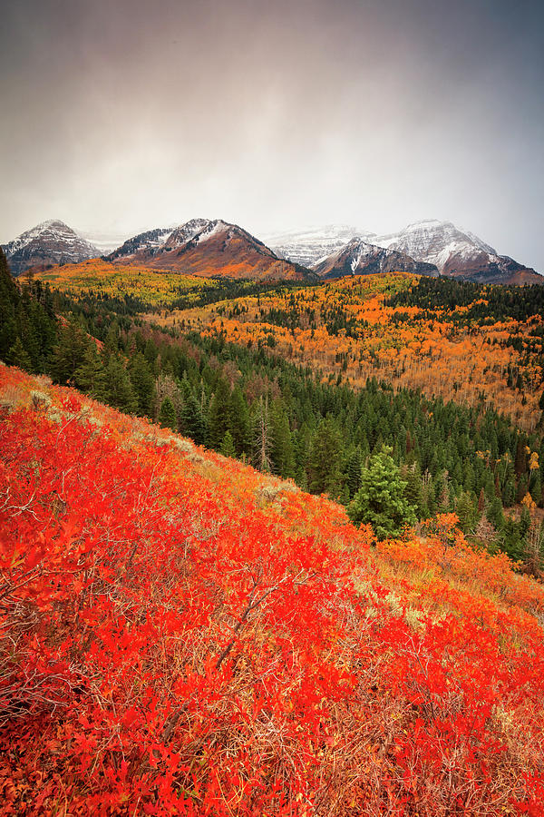 First Fall Snow on Timpanogos by Johnny Adolphson