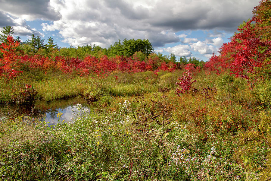 First Signs of Fall - Swamp Maples by Betty Pauwels