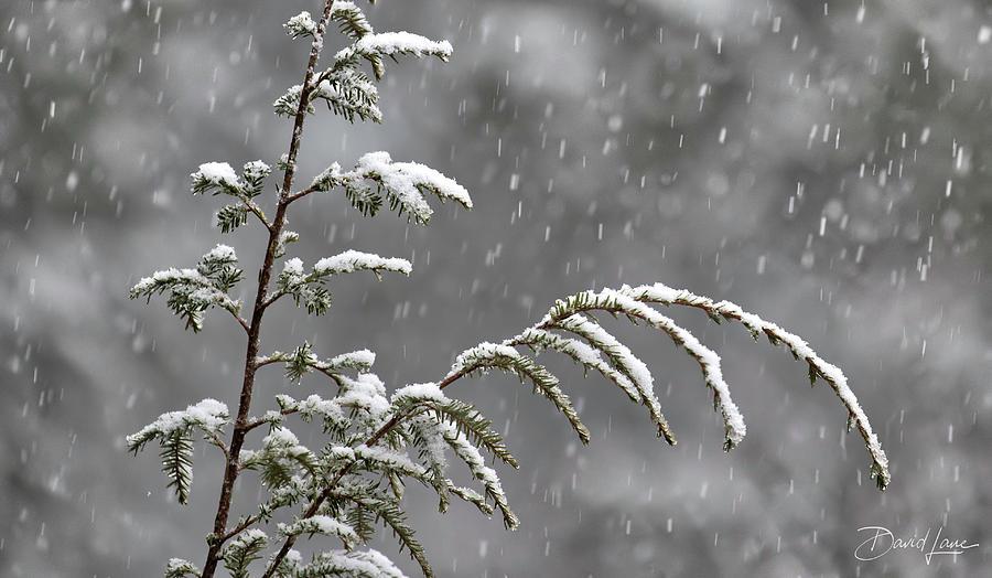 First Snow by David A Lane