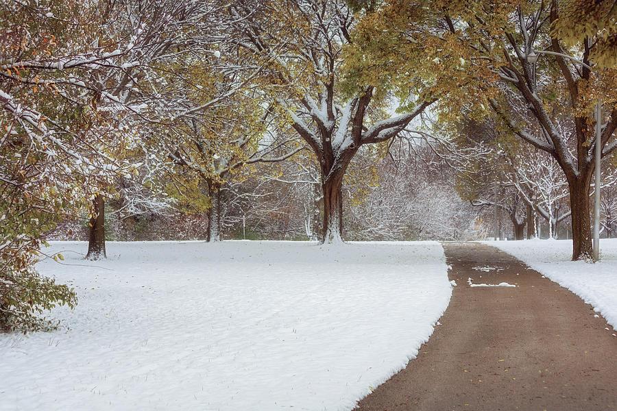 First Snow Day by Kim Hojnacki