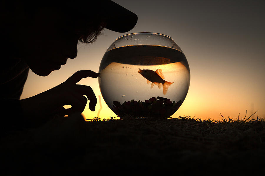 Fish Bowl Photograph - Fish And Child by Ali Acar