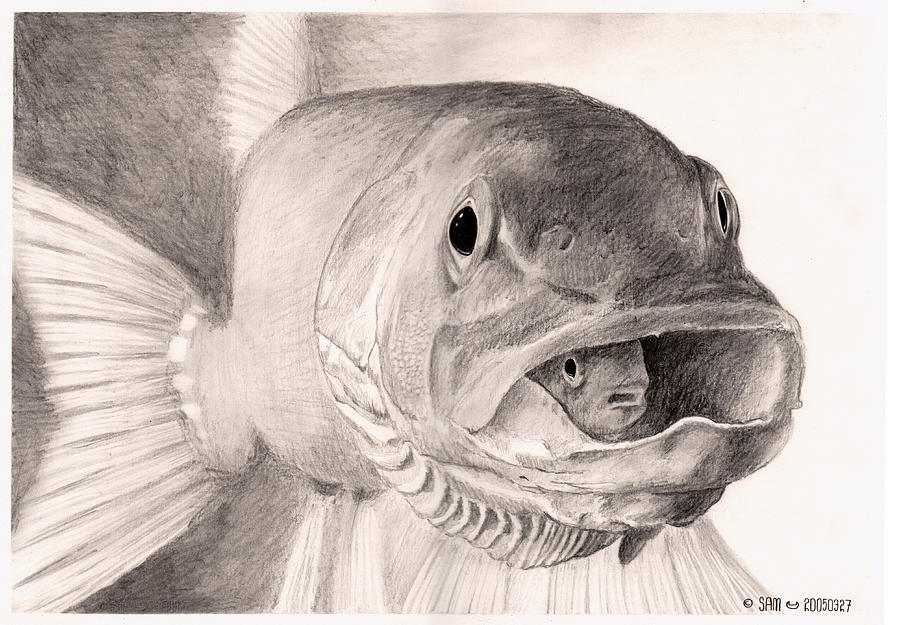 Fish Drawing - Fish in a fish by Sami Matilainen