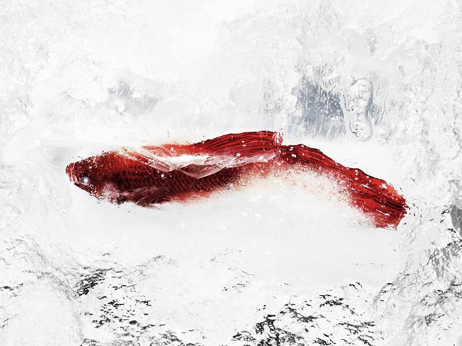 Fish In Ice Photograph by Yusuke Murata