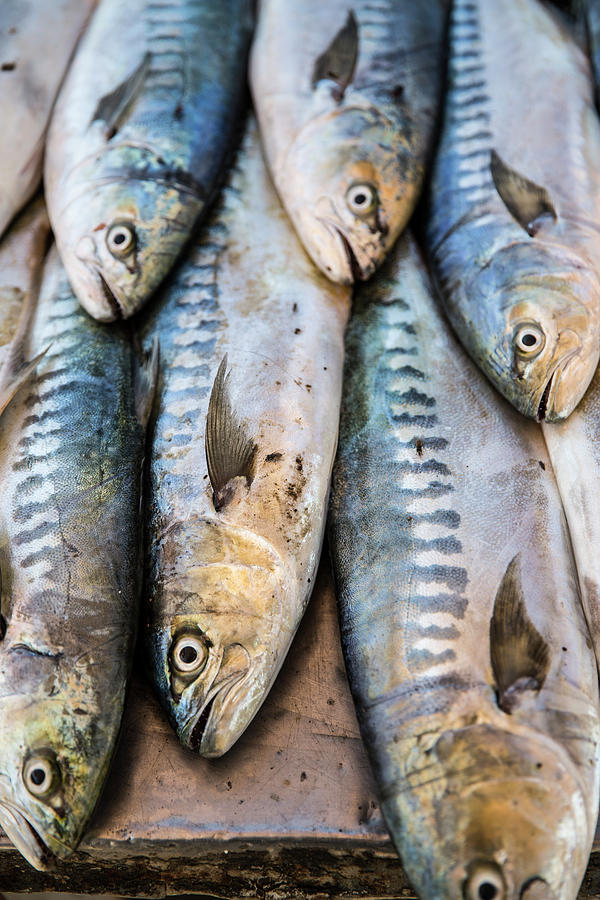 Fish In Market, Taghazout, Morocco Photograph by Tim E White