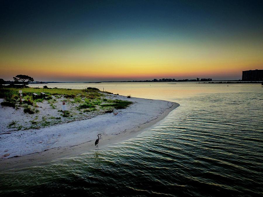 Fish on Robinson Island at Dawn by Michael Thomas
