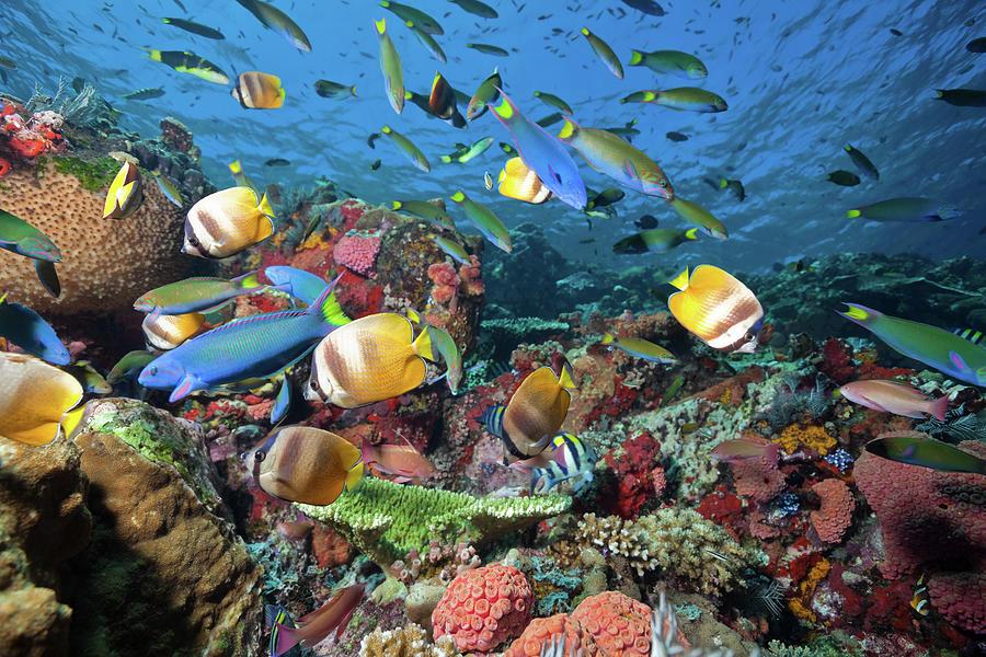 Fish Rush Hour At Coral Reef, Komodo Photograph by Ifish