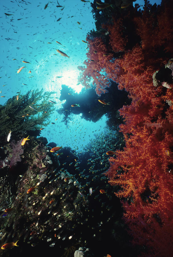 Fish Surrounding Red Soft Coral Photograph by Tammy616