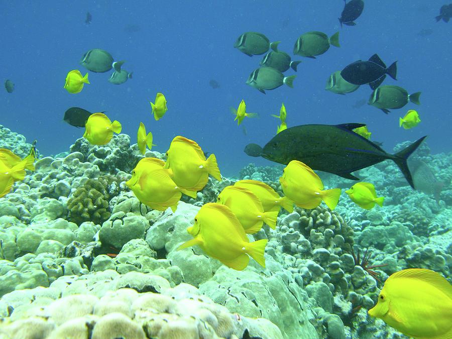 Fish Underwater Photograph by Mphotoi