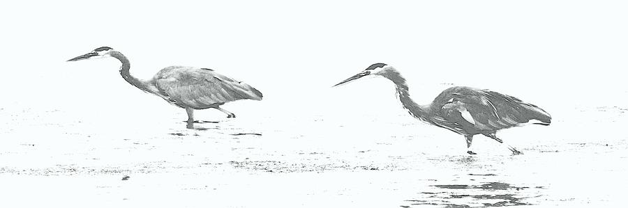 FISHING BLUE HERONS by Barbara Henry