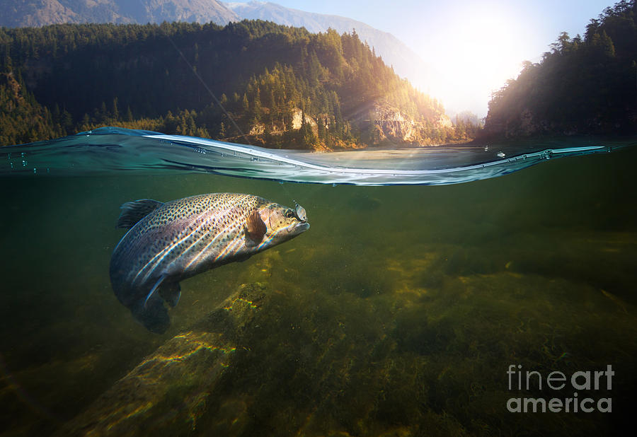 Flare Photograph - Fishing Close-up Shut Of A Fish Hook by Rocksweeper