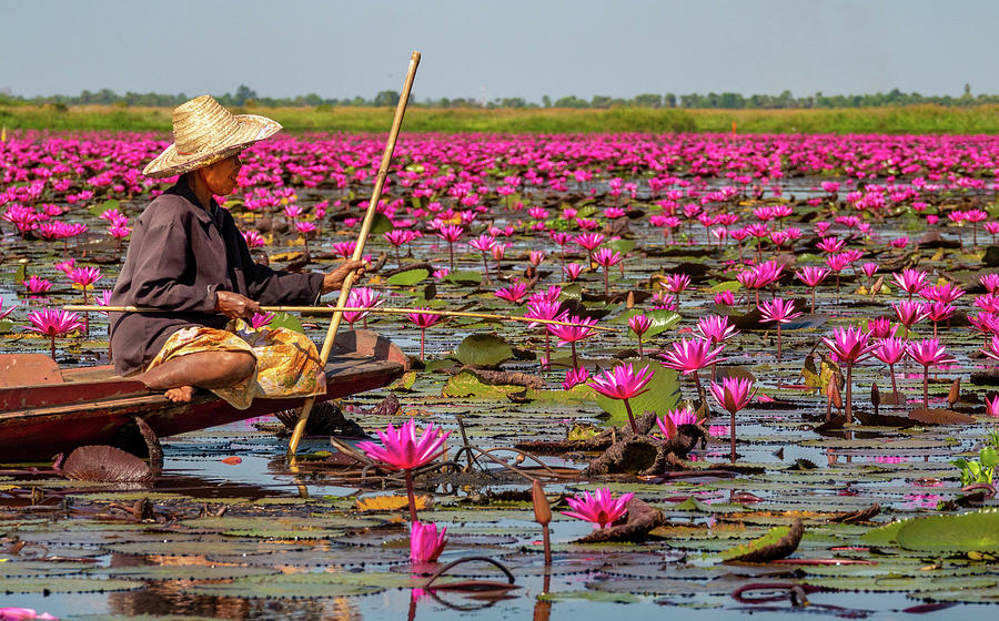 Fishing in the Red Lotus Lake by Jeremy Holton