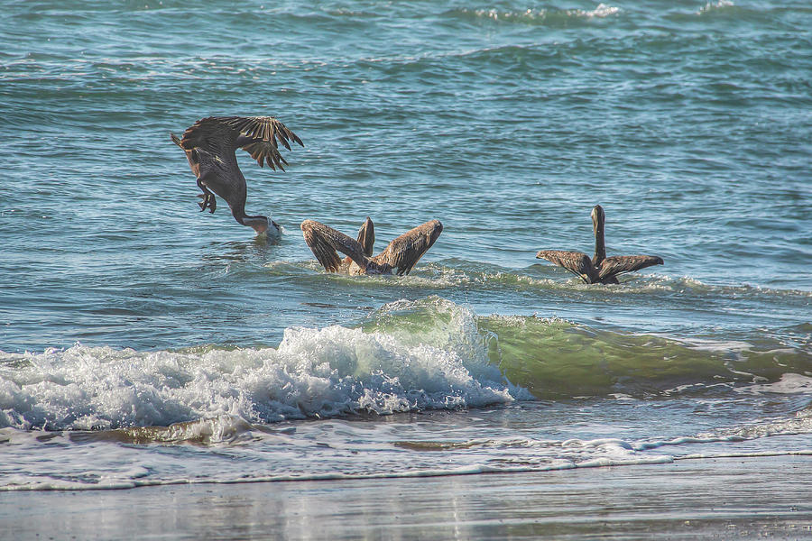 Fishing Pelicans 01094 by Kristina Rinell