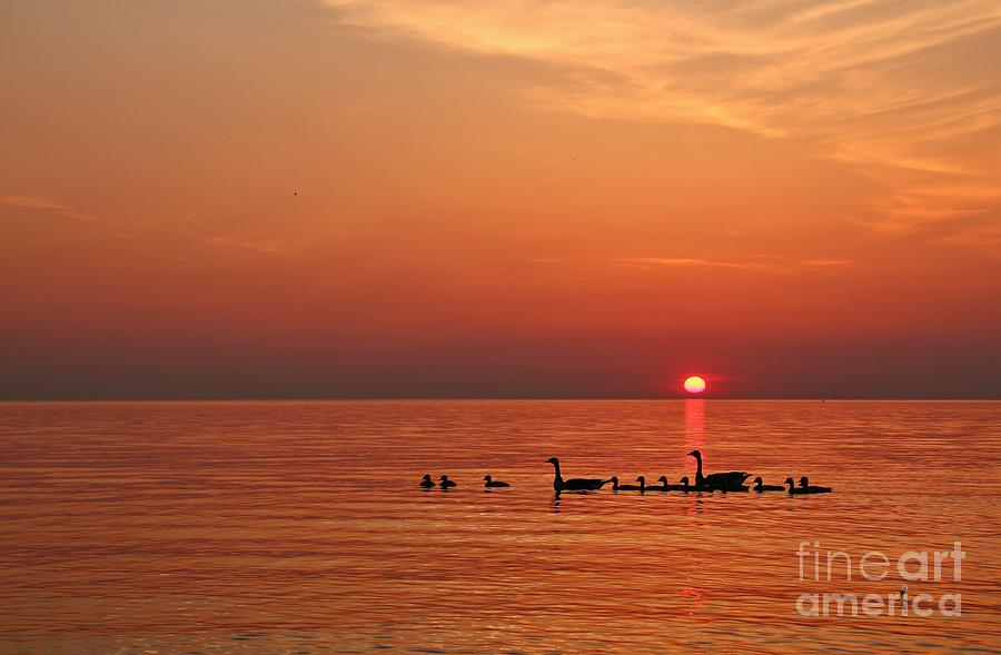 Western New York Photograph - Fishy Geese Sunset by Tony Lee