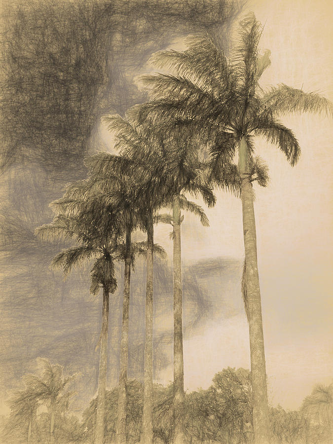 Five Palms by Max Huber