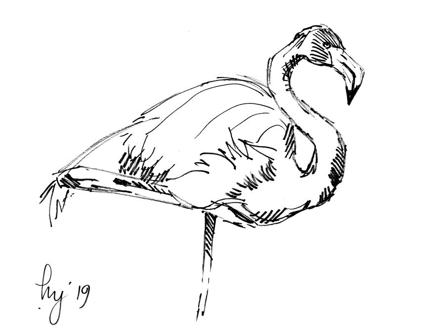 Flamingo black and white drawing illustration by Mike Jory