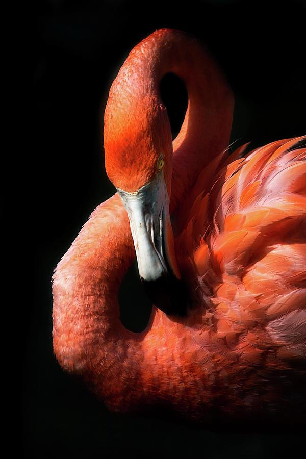 Flamingo by Cyndy Doty