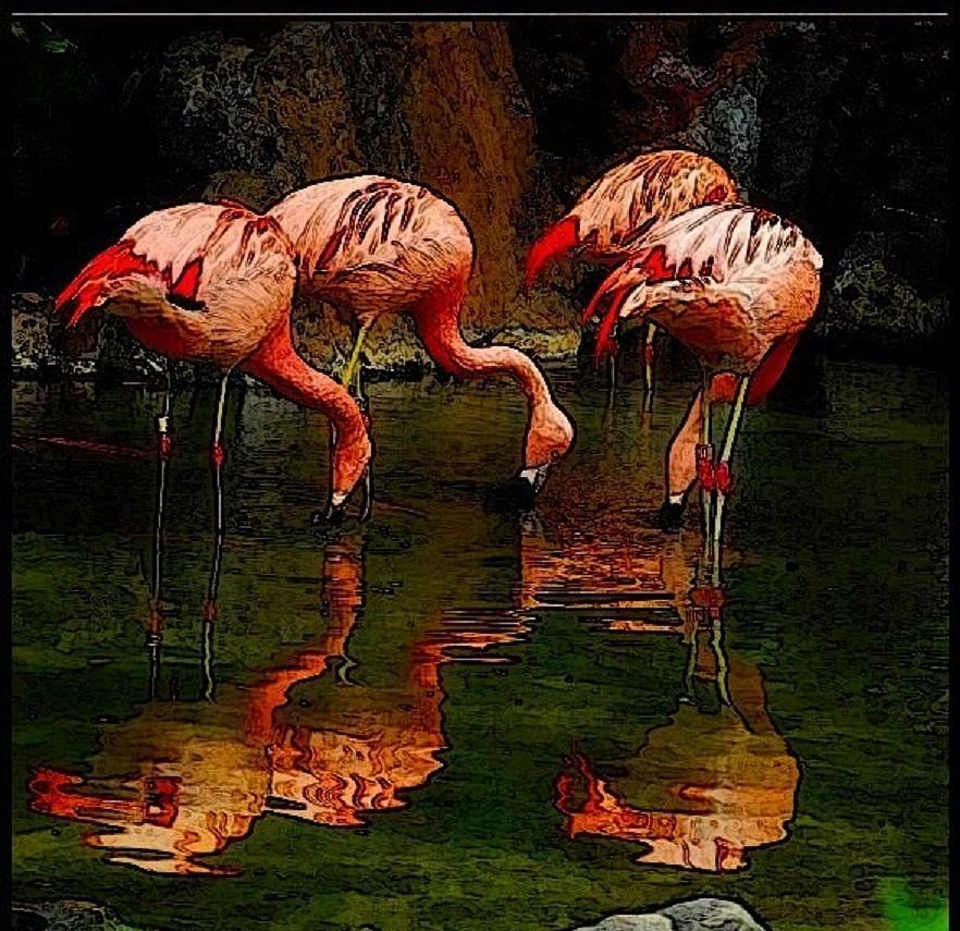 Flamingo Feasting Mixed Media