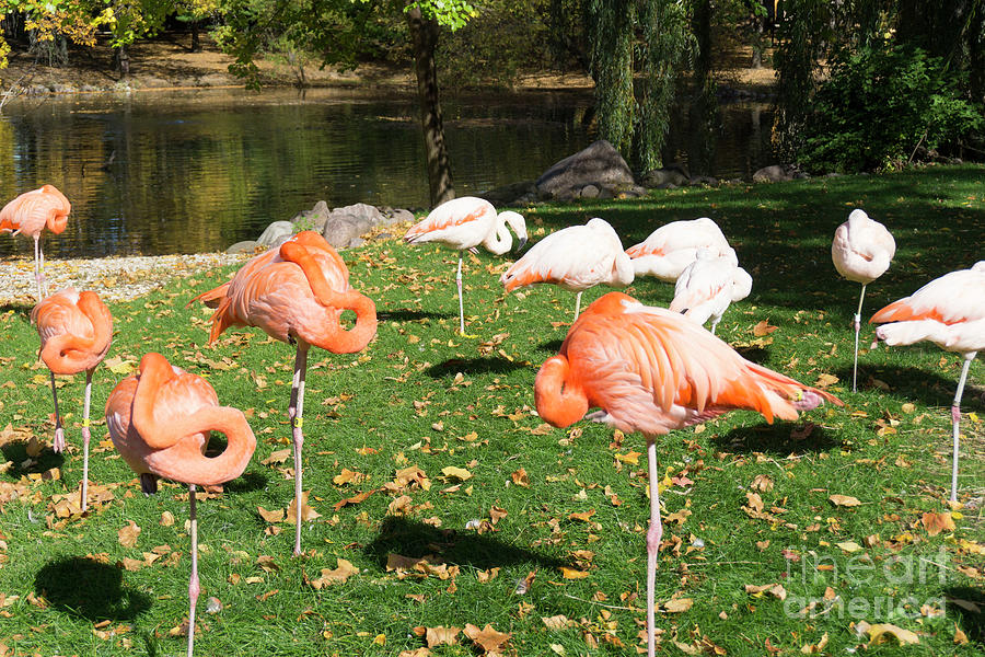 Flamingo Group by Randall Saltys