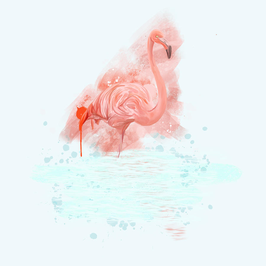 Flamingo In Water Photograph