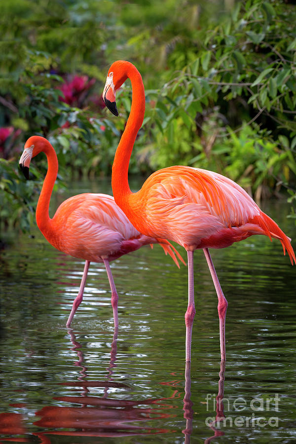 Flamingo Pair II by Brian Jannsen