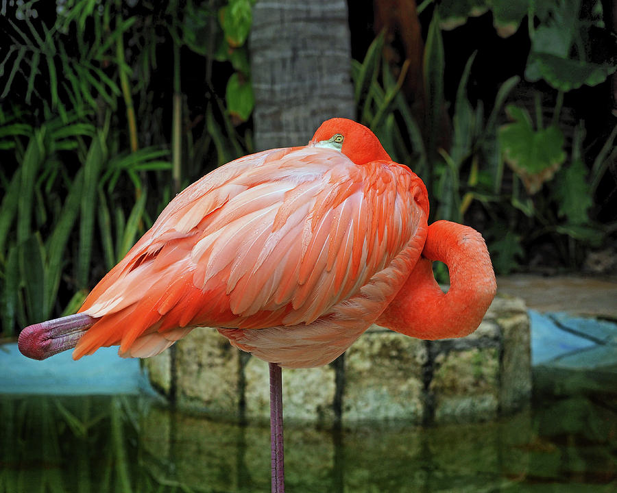 Flamingo Peekaboo by Bill Swartwout Fine Art Photography