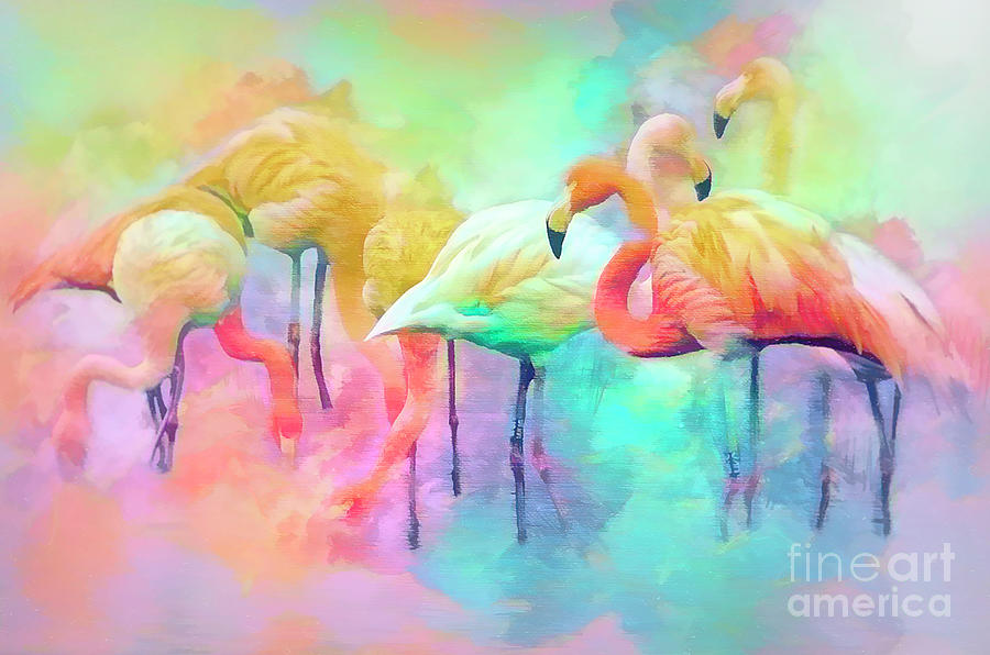 Flamingo rainbow by Brian Tarr