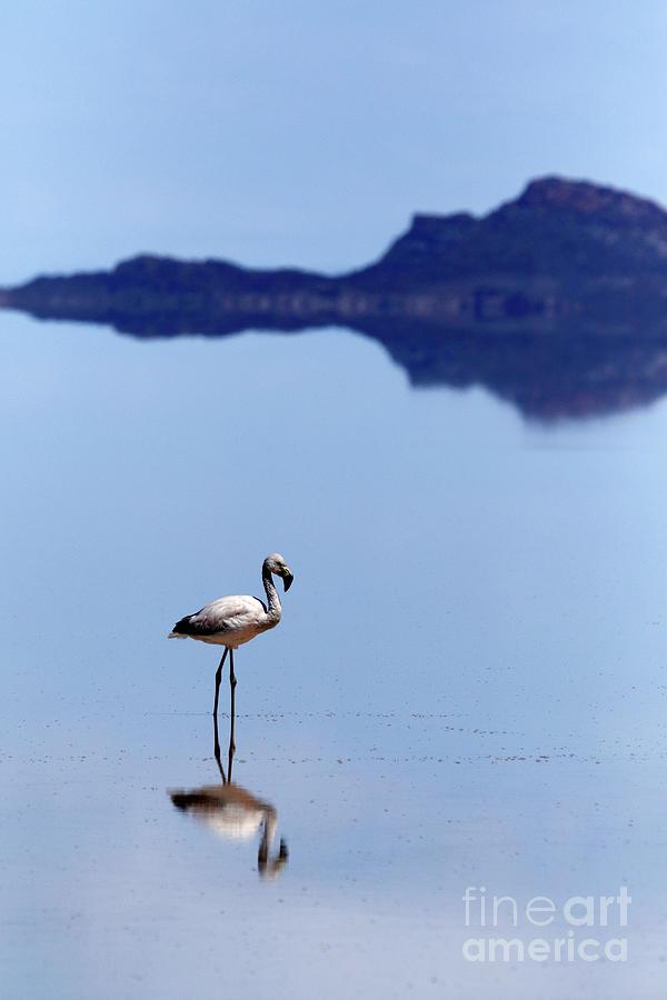 Flamingo Reflections Salar de Uyuni Bolivia by James Brunker