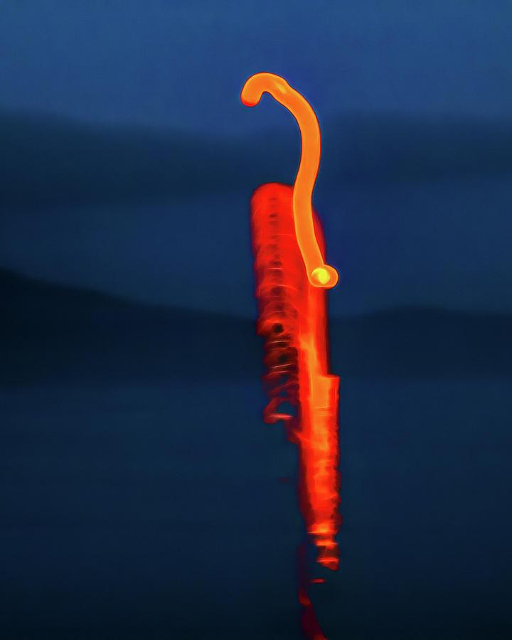 Flamingo by Robert FERD Frank