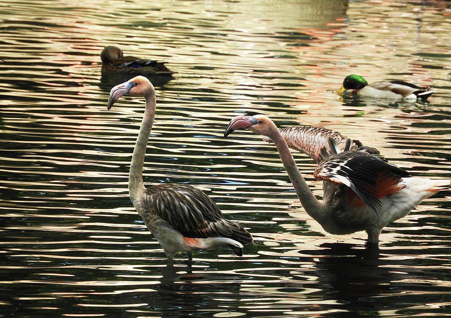 Flamingo Silhouette by Krin Van Tatenhove