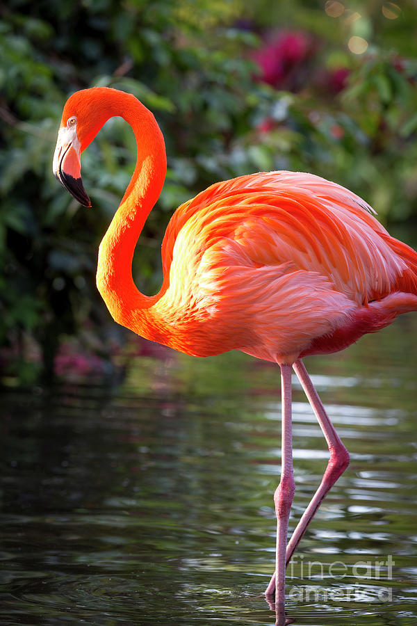 Flamingo V by Brian Jannsen