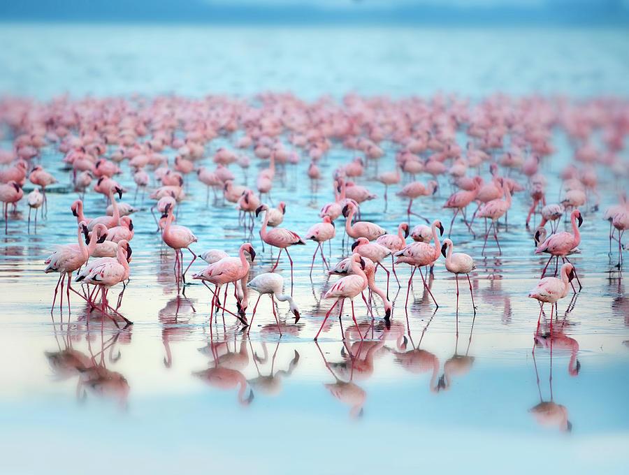 Flamingoes Photograph by Grant Faint