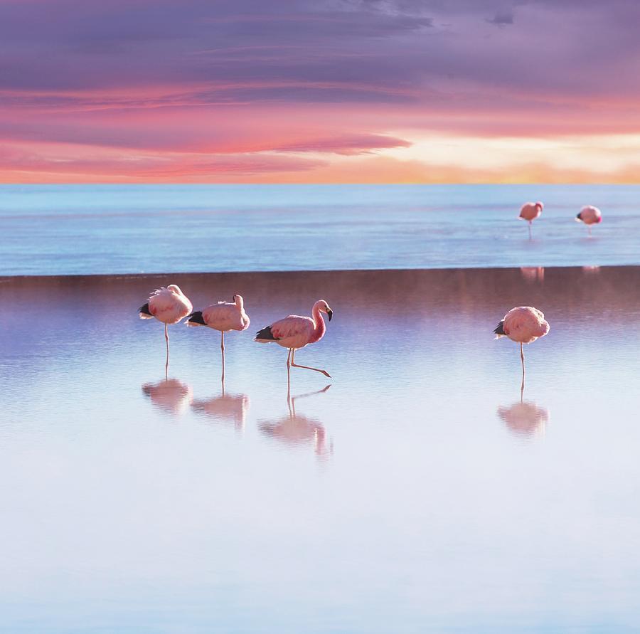 Flamingoes In Bolivia Photograph by Ingram Publishing
