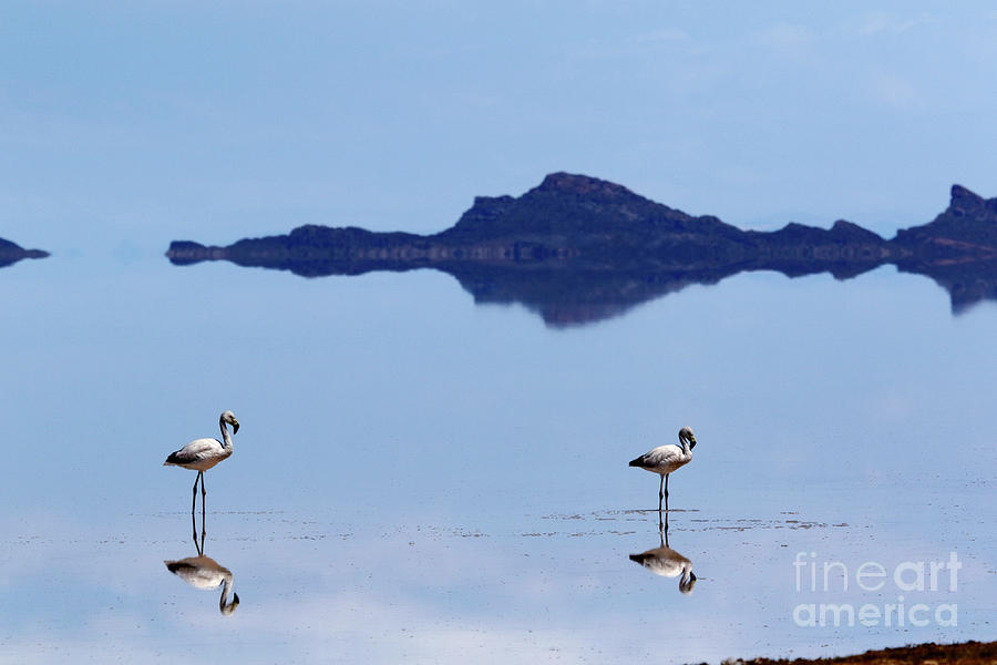 Flamingos and Reflections on the Salar de Uyuni Bolivia by James Brunker
