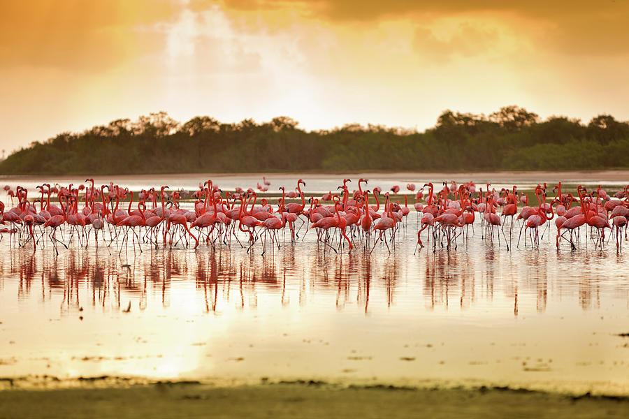 Flamingos At A Tropical Coastal Lagoon Photograph by Apomares