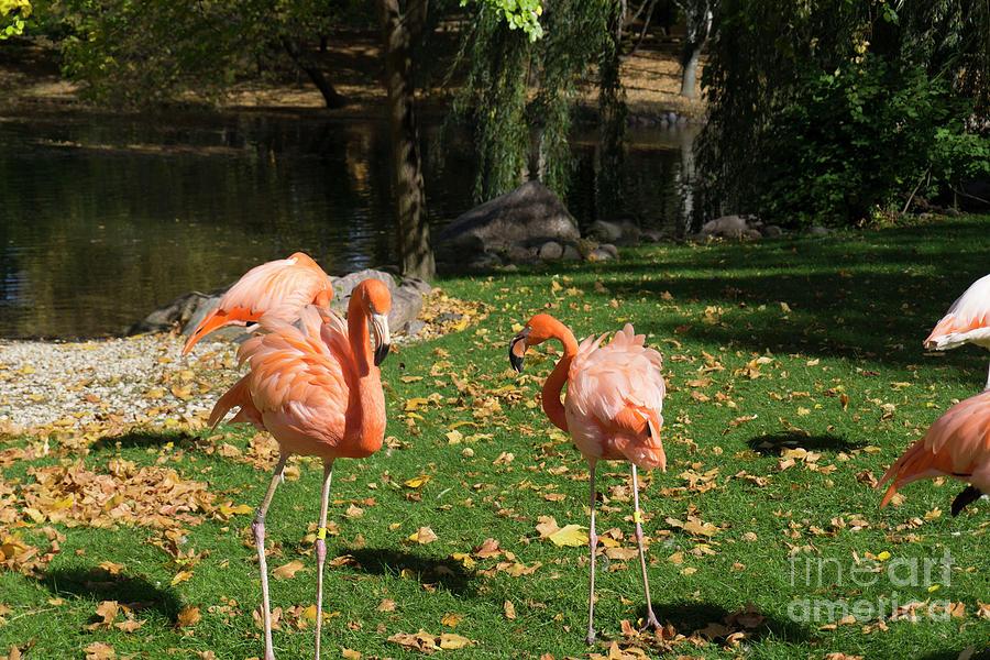 Flamingos Awake by Randall Saltys