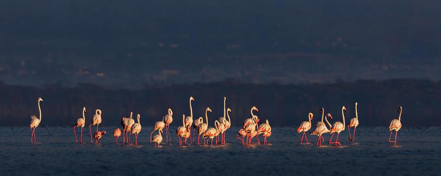 Flamingos by Diana Andersen