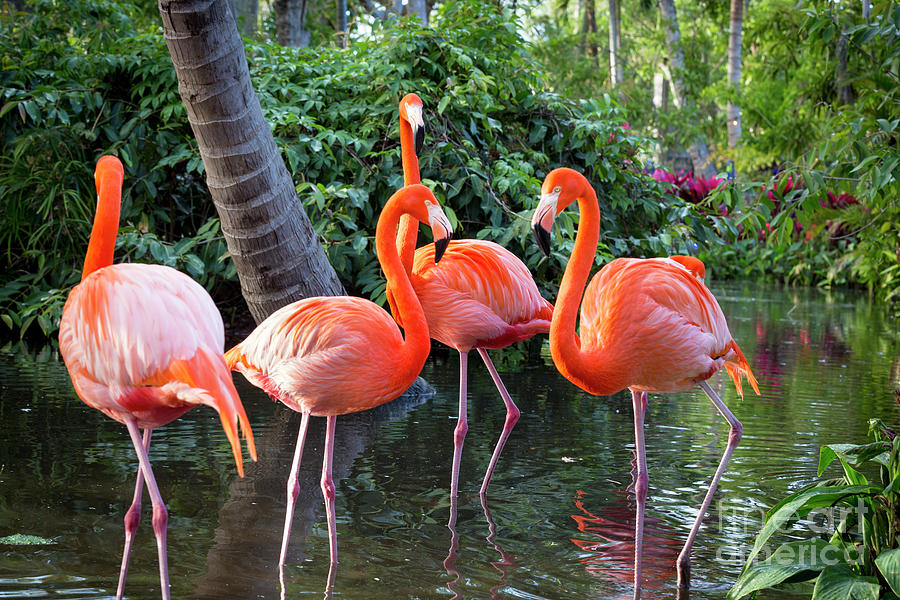 Flamingos III by Brian Jannsen