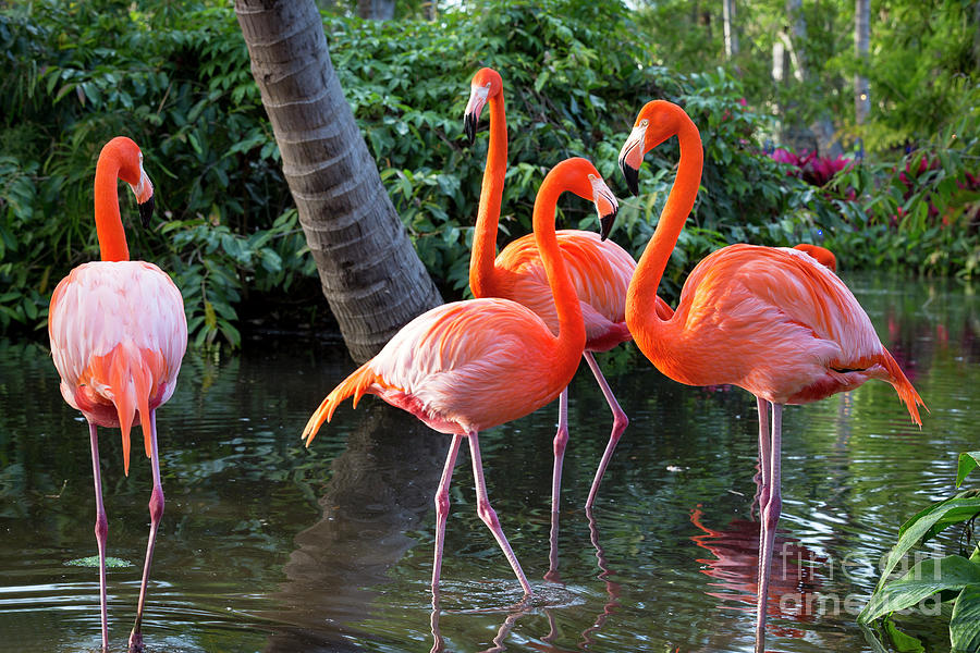 Flamingos IV by Brian Jannsen
