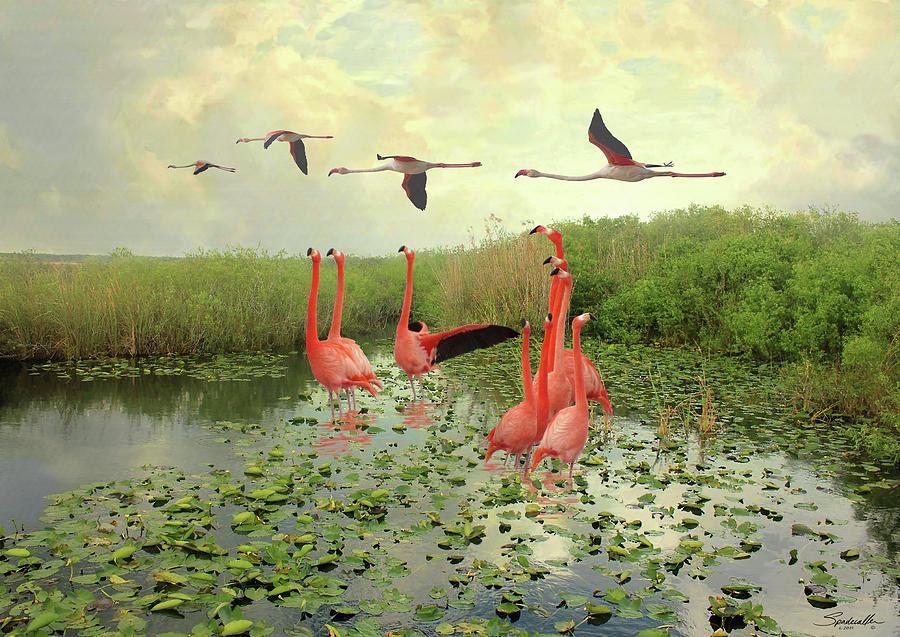 Flamingos of Florida by Spadecaller