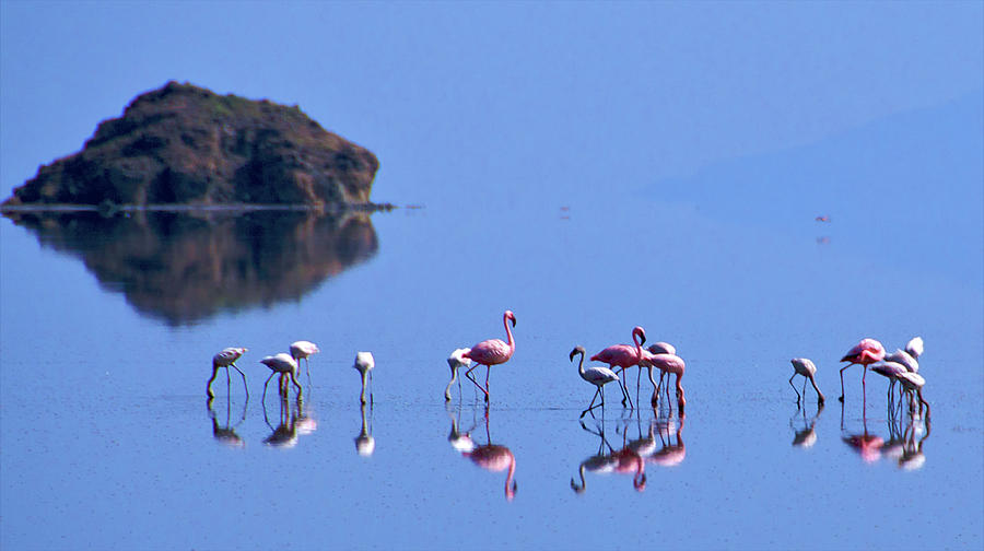 Flamingos On Blue Lake Natron Photograph by Peter Stanley / Www.photopoa.com