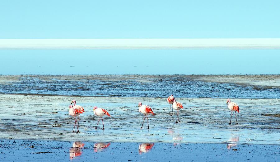 Flamingos On Salt Flats Photograph by George Kalaouzis