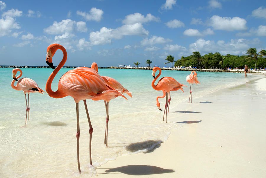 Flamingos On The Beach Photograph by Vanwyckexpress